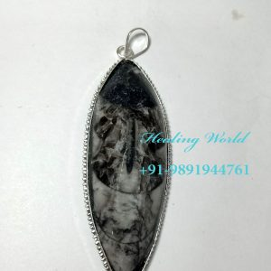 Energized Orthoceras Pendants (Size approx 3-4 inch)