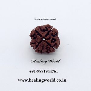 Energized 4 Mukhi Nepali Rudraksh bead (Size 21-23 inch approx)